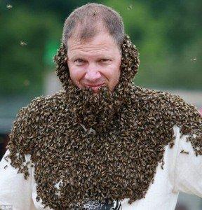 Лечение организма  пчелиным роем
