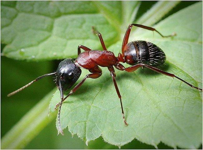 Суставы спирт муравьи что уменьшает трение в суставе