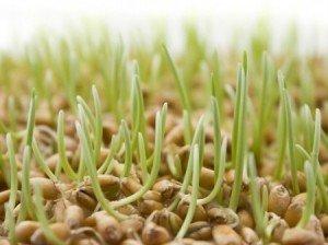 Лечение ростками. Часть 2