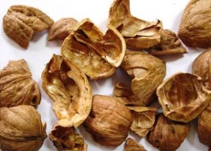 зрелая скорлупа грецкого ореха
