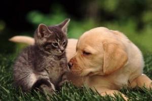 домашние друзья